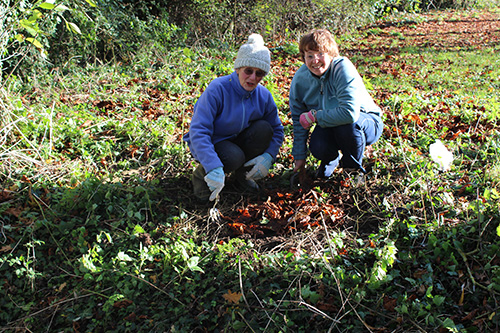Margaret and Christine planting wild daffodils in a location overlooking the pond