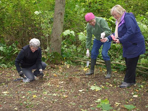 Margaret, Pavla and Angela planting wild bulbs